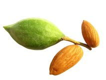 Fresh green and dry almonds Stock Image