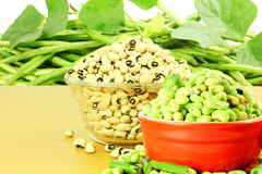 Fresh green and dry Black eye peas beans with plant in and out of the shell Stock Photos