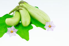 Fresh green eggplants with leafs and flowers Royalty Free Stock Image