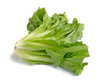Endive on white Royalty Free Stock Photos