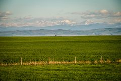 Fresh green of Farmland in Southern Alberta in Canada. Farmland of Southern Alberta in Canada, fresh green meadows and fields in canadian countryside royalty free stock photos