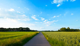 Fresh green farmlandscape. With road with blue cloudy sky Royalty Free Stock Photos