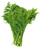 Fresh green fennel Stock Photo