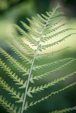 Fresh green fern leaf Stock Photo
