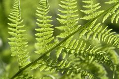 Fresh green fern leaf Stock Image