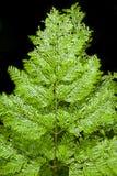 Fresh green fern leaves Stock Photo