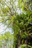 Fresh green fern leaves Stock Images