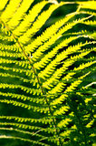 Fresh green fern leaves nature background Stock Image