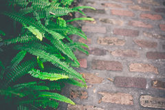 Fresh Green Fern Leaves. Nature Background Stock Photos