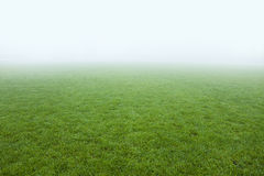 Fresh green field Royalty Free Stock Photos