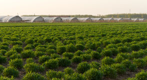 Fresh green on field spring agriculture Stock Photos