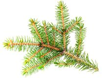 Fresh green fir branches. Royalty Free Stock Image
