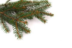 Fresh green fir branches Stock Photo