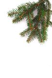 Fresh green fir branches Royalty Free Stock Image