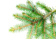Fresh green fir branches. Isolated Stock Images