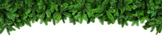 Fresh green fir branches, wide Christmas border Royalty Free Stock Photo