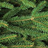 Fresh Green Fir Twig Needle Background Horizontal Stock Photo