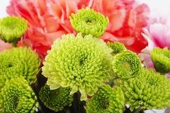 Fresh green flower Stock Photo