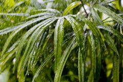Fresh green flower leaves with raindrops Stock Images