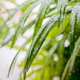 Fresh green flower leaves with raindrops Royalty Free Stock Photo