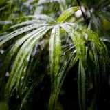 Fresh green flower leaves with raindrops Royalty Free Stock Photos