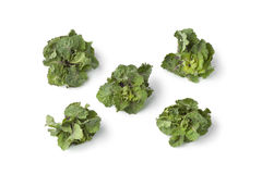 Fresh green flower sprouts. On white background Stock Photography
