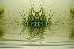 Fresh green foliage Royalty Free Stock Photography