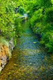 Fresh green foliage along peaceful stream Stock Image