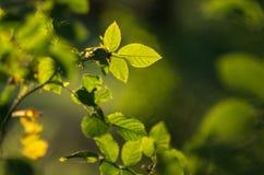 Fresh green foliage Stock Image