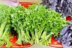 Fresh green foliage in marketplace. Sheaf of fresh green parsley and dill foliage in marketplace Royalty Free Stock Photography