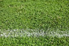 Fresh green football field grass. As background royalty free stock images