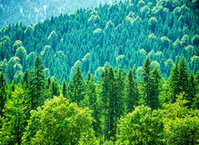 Fresh green forest Stock Photo