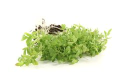 Fresh green garden cress Stock Photos