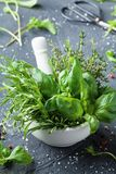 Fresh green garden herbs in mortar bowl for cooking. Thyme, rosemary, basil, and tarragon. Stock Photos
