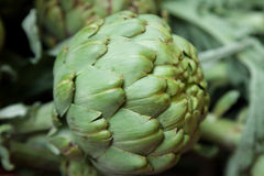 Fresh Green Globe Artichokes at the Local Market Stock Photography