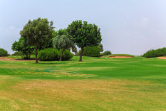 Fresh Green of Golf Field Stock Photography