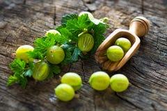 Fresh green gooseberries Stock Photography