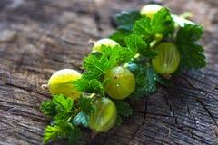 Fresh green gooseberries Stock Photo