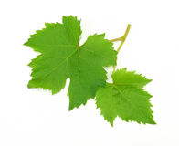 Fresh Green Grape Leaf. On white Background royalty free stock photos