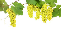 Fresh green grapes isolated on white. Royalty Free Stock Images