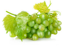 Fresh green grapes with leaf harvest fruit Stock Image