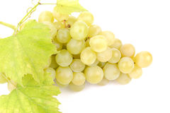 Fresh green grapes with leaves Stock Photos