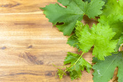 Fresh green grapes leaves on wooden background Royalty Free Stock Image