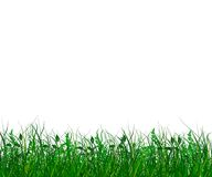 Fresh green gras Royalty Free Stock Photo