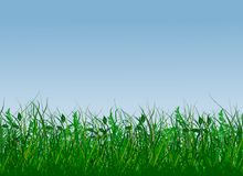 Fresh green gras Stock Images