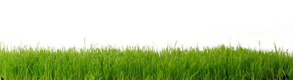 Fresh green gras Royalty Free Stock Photos