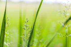 Fresh green gras background Stock Photos