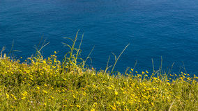 Fresh green gras on the sea. Fresh green grass on bright sunny day and sea in the background royalty free stock image