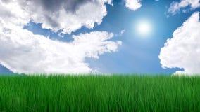 Fresh green grass stock footage