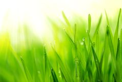 Free Fresh Green Grass Stock Photography - 13427262